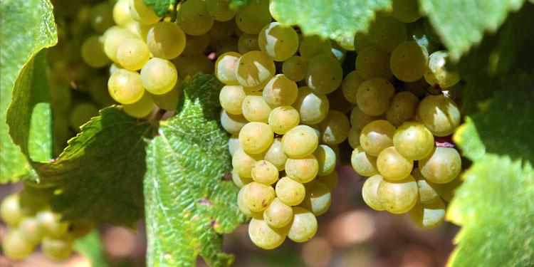 üzüm, Kuran'da geçen meyveler
